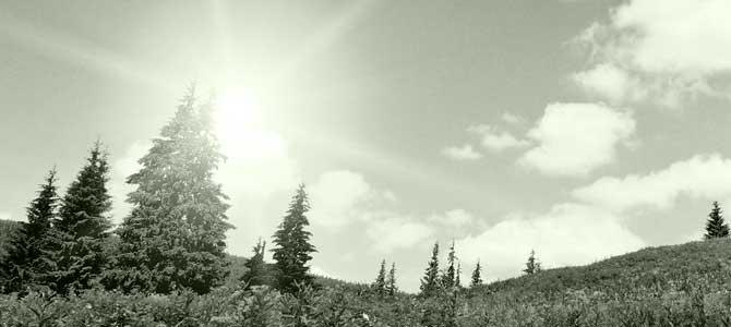 trees-environment