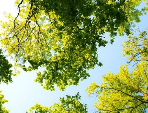 How to Cut Your Business Carbon Footprint